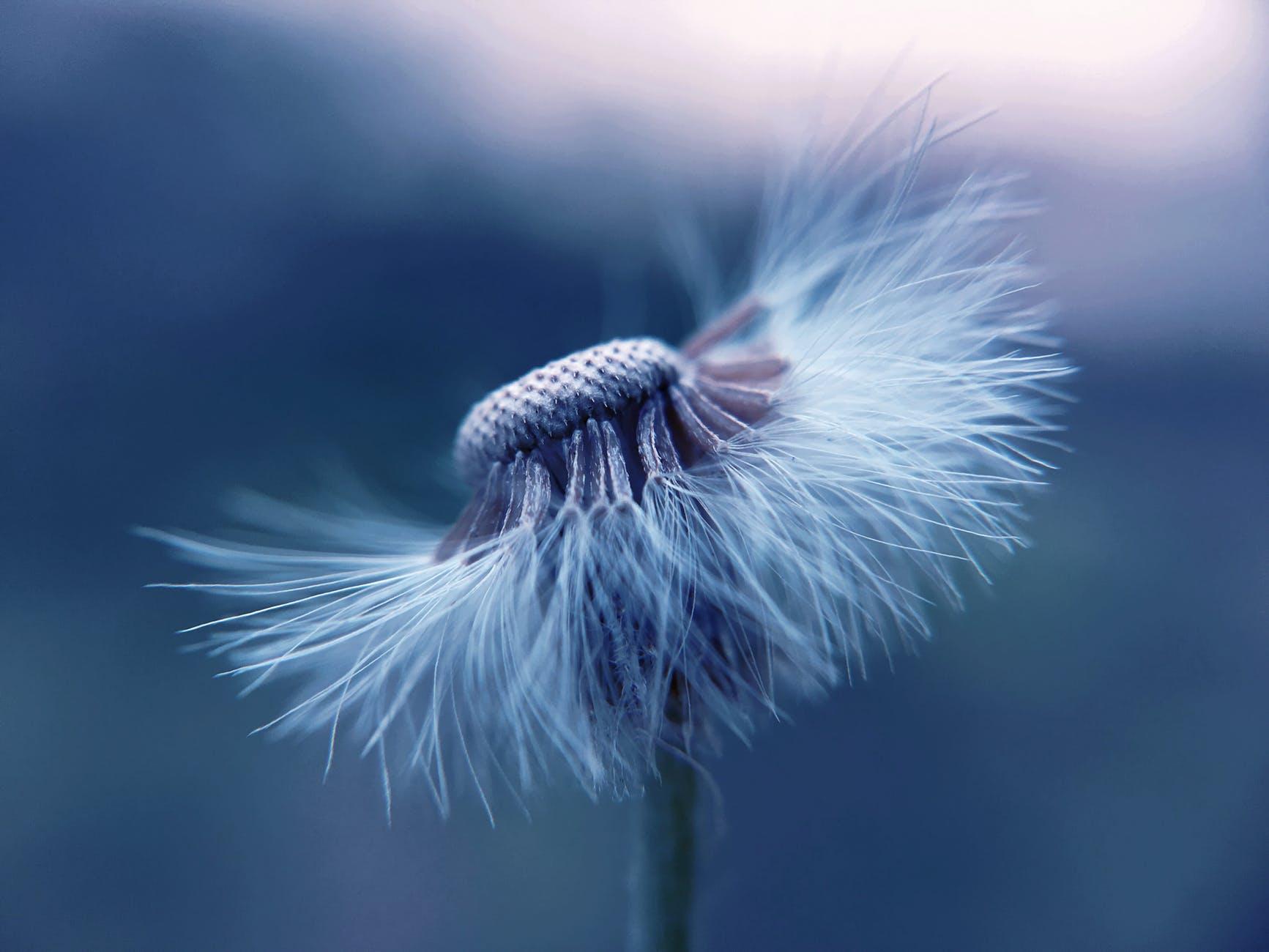 花朵美麗,也蘊藏危險的過敏原